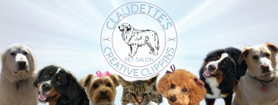 Pet Salon, Pet Groomer, Claudettes Creative Clippins